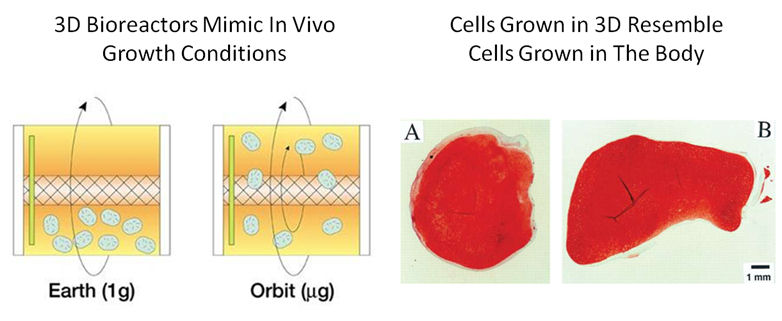 cells grown in 3 dimensional environment